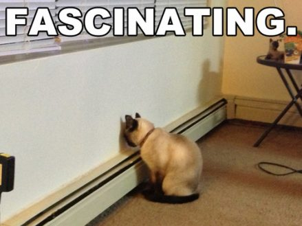 Fascinating-Cat-Meme
